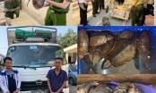 Thanh Hóa: Bắt giữ vụ vận chuyển trái phép 1,5 tạ tê tê, rùa hoang dã
