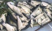 Thanh Hóa: Xử phạt 2 công ty xả thải gây ô nhiễm ra sông Lạch Bạng gần 1 tỉ đồng