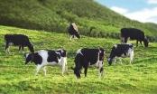 Bảo hiểm Nông nghiệp thiếu hấp lực với cả doanh nghiệp và người dân