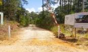 Lộ hàng loạt tỉnh miền Trung xin chuyển đất rừng tự nhiên sang dự án