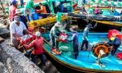 Bình Thuận: Đẩy mạnh chống khai thác IUU, hướng đến phát triển bền vững nghề cá