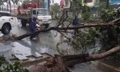Bão số 12 đổ bộ Khánh Hòa - Phú Yên, nhiều cây xanh bị quật ngã