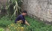 Đông Anh, Hà Nội: Vào tù vì tranh chấp đất ruộng