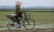 Thí điểm tích tụ đất đai đầu tư nông nghiệp tại Thái Bình và Hà Nam
