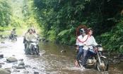 Bắt khẩn cấp nguyên giám đốc BQL rừng phòng hộ Sông Tranh