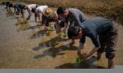 Triều Tiên hạn hán tồi tệ nhất trong hơn 1 thế kỷ