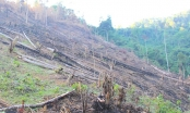 Nghệ An: 5 cán bộ xã bị kỷ luật vì để xảy ra phá rừng
