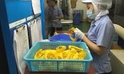 Thị trường lao động Việt Nam đang phục hồi rất nhanh