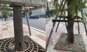 Hải Phòng: Vỉa hè sông Tam Bạc bị cong vênh do điều kiện thiên nhiên khắc nghiệt
