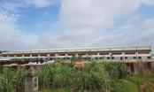 Công ty CP Chế biến nông sản thực phẩm xuất khẩu Hải Dương bị xử phạt 300 triệu đồng