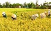 Hoàn thiện Điều lệ Liên minh Hợp tác xã Việt Nam