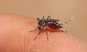 Chớ vội mừng khi thấy dịch sốt xuất huyết giảm