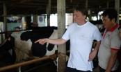 Hướng tới sự phát triển bền vững ngành chăn nuôi bò sữa Việt Nam