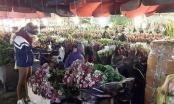 Chợ hoa đêm Quảng An: Rực rỡ và nhộn nhịp ngày giáp tết