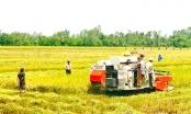 Chính phủ yêu cầu tái cơ cấu ngành nông nghiệp phải gắn với phát triển, mở rộng thị trường