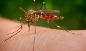 Bộ Y tế cảnh báo virus Zika gây teo não xâm nhập Việt Nam