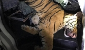 Thanh Hóa: Xe cứu thương vận chuyển... hổ đông lạnh