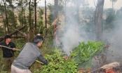 Hà Nam: Hơn 1 héc ta rừng keo bị cháy rụi