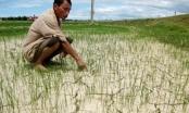 Khô hạn, nắng nóng tác động mạnh đến đà tăng CPI tháng Tư