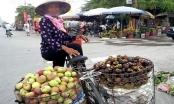 Cẩn trọng với táo Trung Quốc đội lốt táo Quản Bạ - Hà Giang