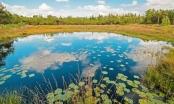 """Bí ẩn những """"xác ướp đầm lầy"""" 2.000 năm tuổi ở khắp Bắc Âu"""