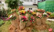 Hàng nghìn cây hoa hồng hội tụ tại lễ hội hoa ở Hà Nội