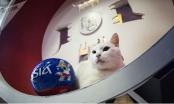 Chú mèo điếc đoán đúng kết quả tất cả các trận đấu World Cup