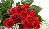 Khi nào hoa hồng mới thể hiện tôn vinh phụ nữ trong ngày 8/3?