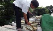 Nghệ An: Tạm giữ xe tải chở 10 tấn xương động vật thối