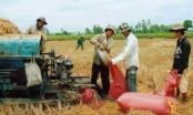 """Đảm bảo an ninh lương thực:Phải """"níu"""" nông dân  ở lại với ruộng đồng"""