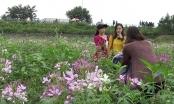 Chen chân phá nát hoa tam giác mạch: Nghệ thuật hay a dua