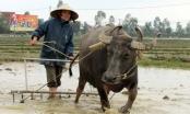 Tăng cường quản lý đất đai  có nguồn gốc từ nông, lâm trường