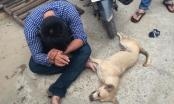 Quảng Ngãi: Cẩu tặc tử vong vì ngã xe máy trong lúc hành nghề