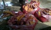 Quảng Nam: Bắt giữ xe khách chở gần nửa tấn thịt thối