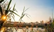 Dự báo thời tiết ngày 9/1: Hà Nội có nắng