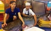 """TP HCM: Cá có thân hình lớn nhất thế giới """"trôi dạt"""" đến Việt Nam"""