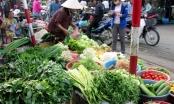 Nhiệt độ giảm kỷ lục, giá rau xanh tăng gấp đôi ngày thường