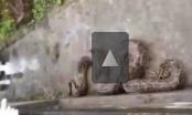 """Video: Thanh niên phá mộ bắt trăn """"khổng lồ"""""""