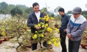 Nghệ An: Rực rỡ những cung đường hoa Tết