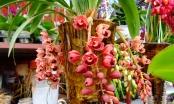 Hà Nam: Thành phố Phủ Lý rực rỡ sắc hoa xuân