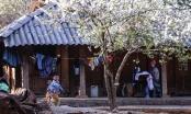 """Sa Pa, Lào Cai: """"thiên đường hạ giới"""" qua ống kính bốn mùa"""