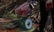"""Hưng Yên: Thịt đà điểu """"hét"""" giá 300 nghìn đồng/kg  ngày giáp Tết"""