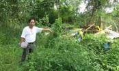 Khánh Hòa: Cho nhờ đất nuôi lợn, mất trắng vườn cây bạc tỷ