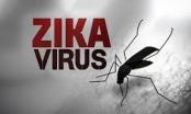 Cảnh giác phát hiện sớm dịch bệnh virut Zika
