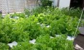 """Bộ Nông nghiệp & Phát triển nông thôn tổ chức tuần lễ giới thiệu """"Nông sản an toàn"""""""