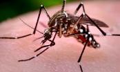 Bộ Y tế khẩn trương xác minh thông tin người Hàn Quốc nhiễm virus Zika từ Việt Nam