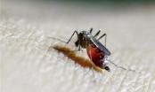 Người Hàn Quốc nhiễm virus Zika trở về từ Việt Nam từng ở Quận 7, TPHCM