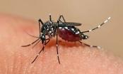 Những ngỡ ngàng về dịch bệnh Zika đối với thai phụ