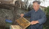 Sản xuất sữa ong chúa sạch thu nhập hàng trăm triệu đồng mỗi năm