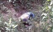 Nghệ An: Phát hiện người phụ nữ tử vong bất thường bên vệ đường